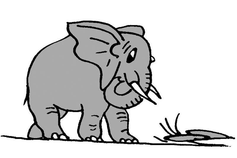 Hội thảo về voi